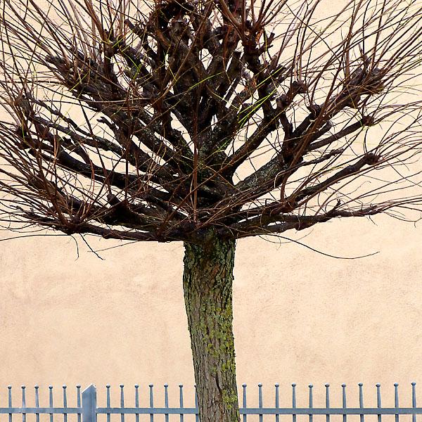 Jahresbaum
