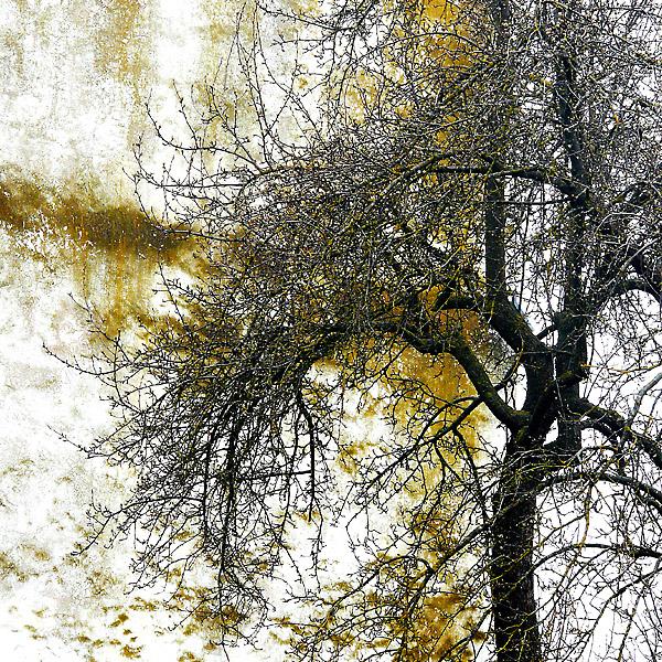 Mauerbäume