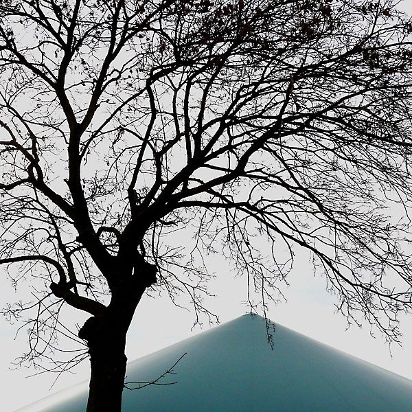 Biogas plant with a bare tree