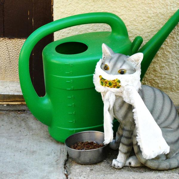 Corona Katze