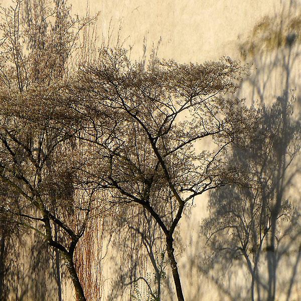 Weitere Mauerbäume