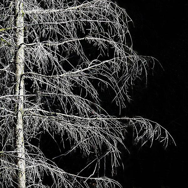 Bild vom Waldsterben
